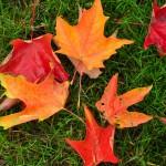 Follow 3 fall plumbing tips from Hubb Plumbing